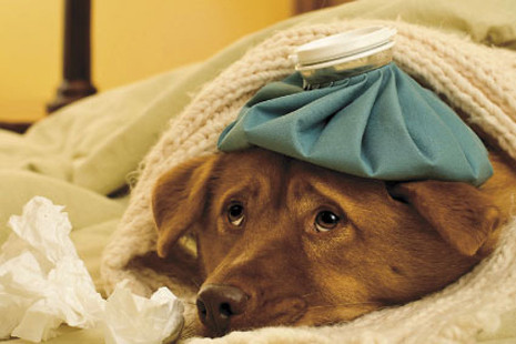 cachorro_gripado_cuidados_inverno.jpg