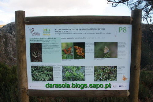 Biodiversidade_Freita_27.JPG