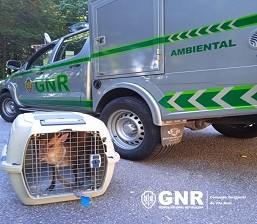 Cervideo-GNR.jpg