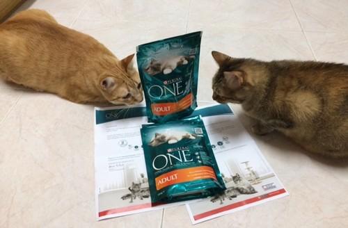 Gatos felizes com amostra Purina!.jpg