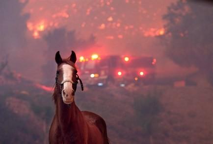 181112-woolsey-fire-al-0910_8de0ed48181eefdaade300