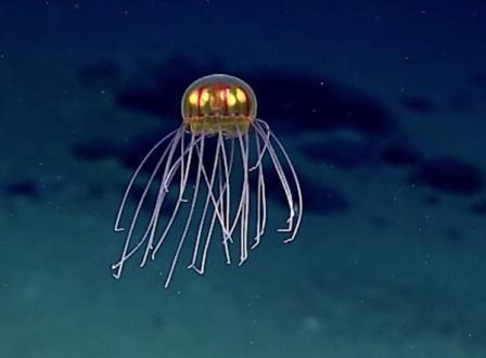 alien-jellyfish-2.jpg