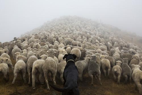 The Shepherd's Realm by Andrew Fladeboe.jpg