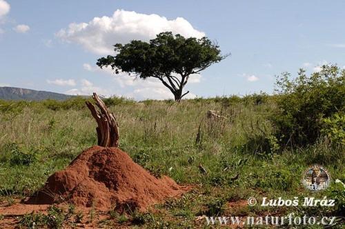 africa 8.jpg