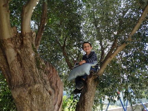 antónio árvore 1.JPG