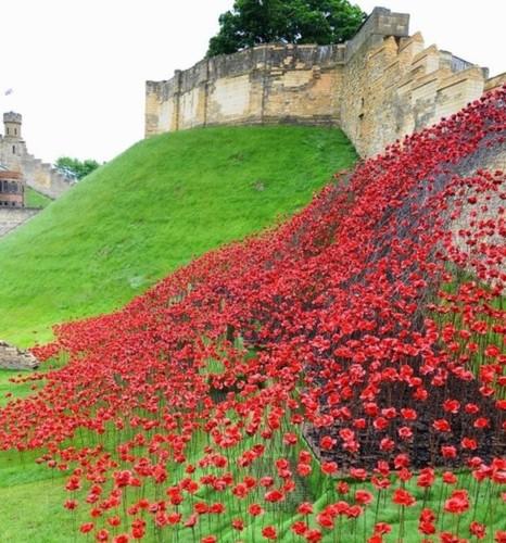 poppies sculptures.jpg