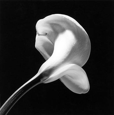 robert mapplethorpe.jpg