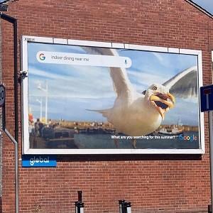 hannah-huxford-seagull-photo-3.jpeg
