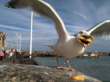 hannah-huxford-seagull-photo-1.jpeg
