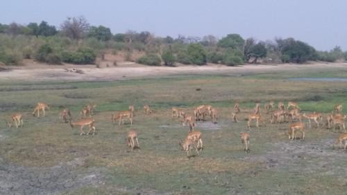 Botswana 275.jpg