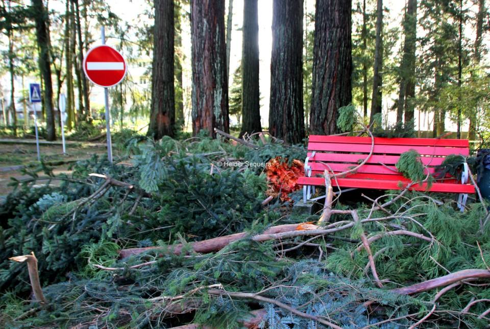 Banco e queda de árvores - HS.jpg