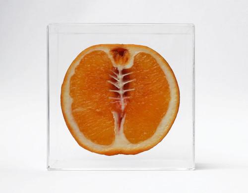 monica-piloni-hybrid-skeletal-fruit.jpg