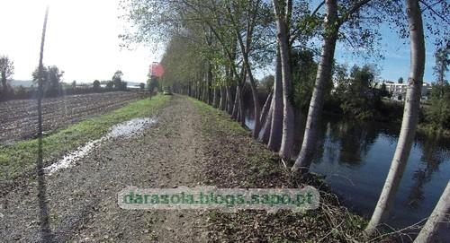 Margens rio Ave Trofa 10.JPG