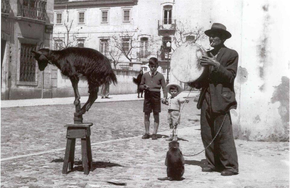 A cabra equilibrista.jpg