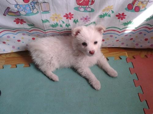 Cãozinho_3