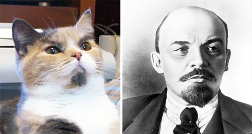 cat-looks-like-other-thing-lookalikes-celebrities-