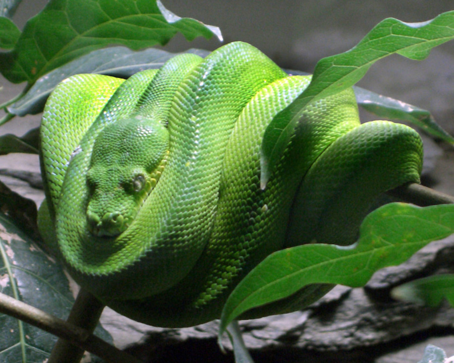 Cobras rastejantes I.jpg