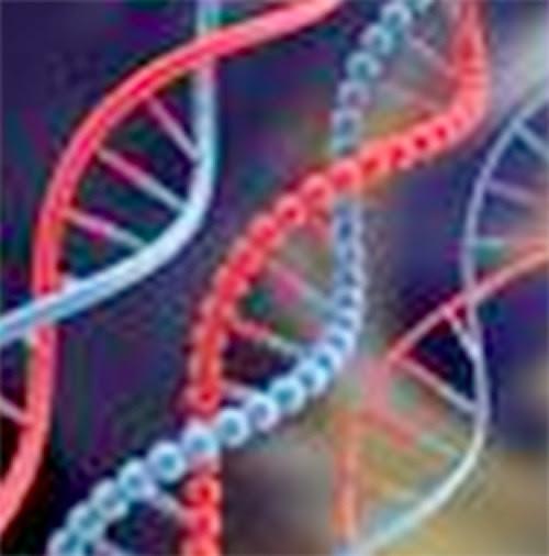 ADN3.jpg