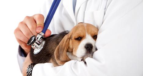 cachorro-no-colo-do-medico.jpg