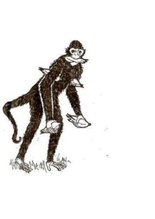 Macaco_roubando_milho_,_carregando_uma_espiga_na_b