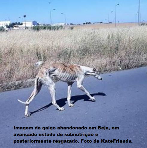 Galgo.png