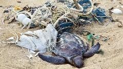 Pollution-Ocean-Beach-Garbage-Dead-Turtle.jpg