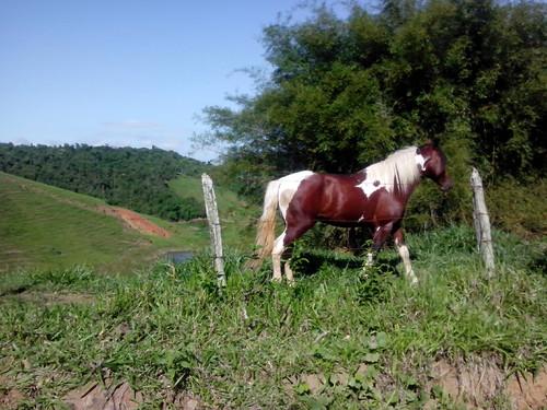 EstVelhaArrozal (6).jpg