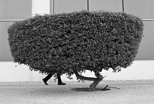 The Walking Bush - Arsenio Jr Nidoy.jpg