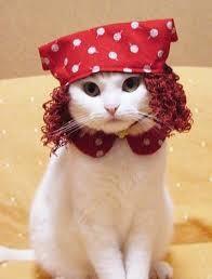 disfarces gatos.jpg