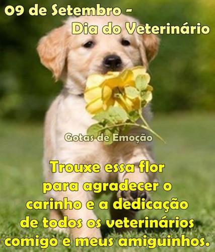 dia-do-veterinario_020.jpg
