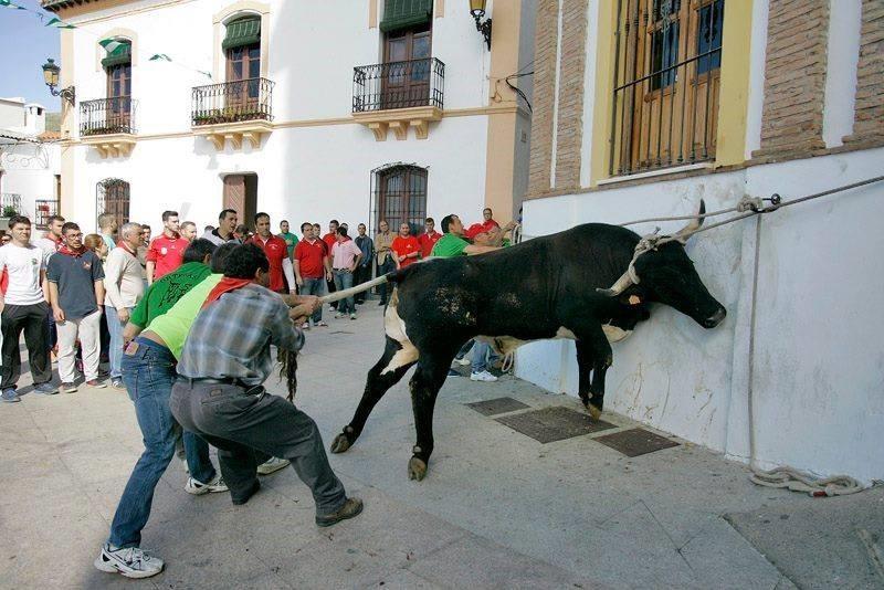 Vaca das cordas.jpeg