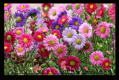 lindas flores.jpg
