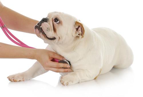 cardiologia-veterinaria.jpg