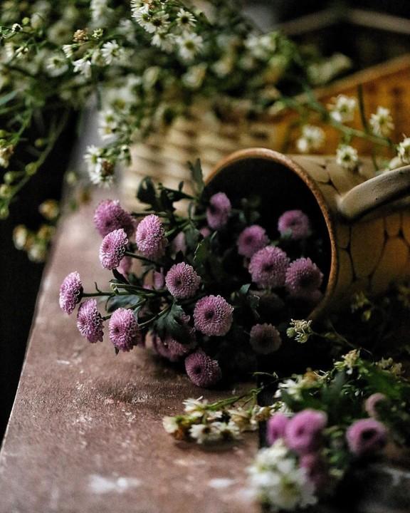lilas.jpg