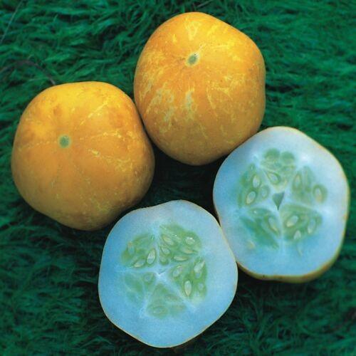 pepino limão 2.jpg