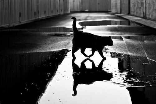 GALERIA_gatos_cat-9.jpg