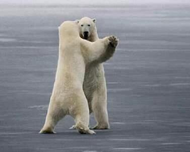 danc3a7a-polar-ii.jpg
