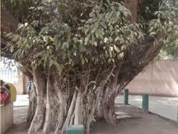 Pedrosa6.jpg