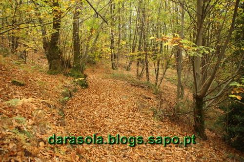 Caminhada_Micologica_12.JPG