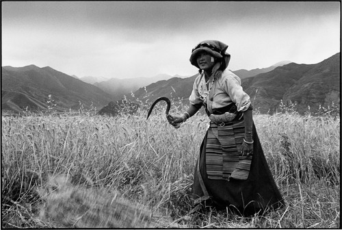 TIBET. 2000. Girl at harvest-time.jpg