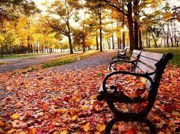 Outono #5.jpg