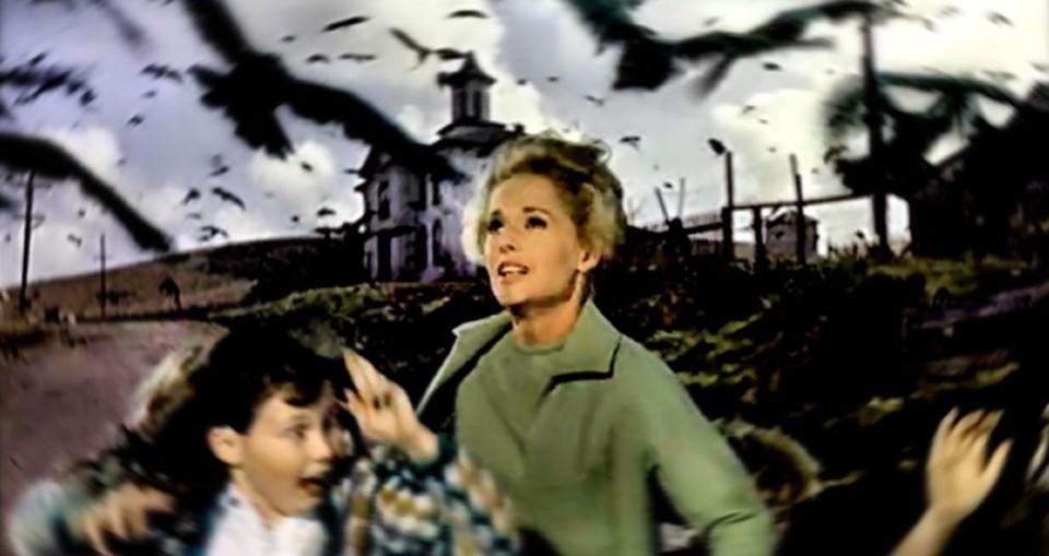 Tippi-Hedren-The-Birds-Alfred-Hitchcock.jpg