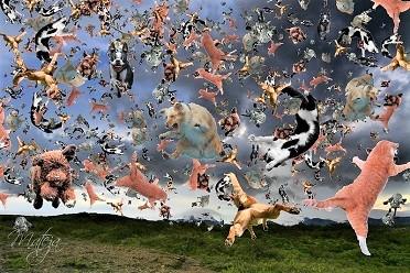 Screenshot_2021-05-03 It's Raining Cats And Dogs.j