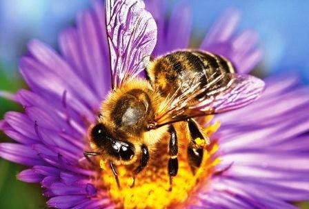 230315_Bees_1.jpg
