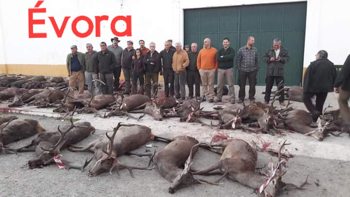 Matança em Évora.jpg