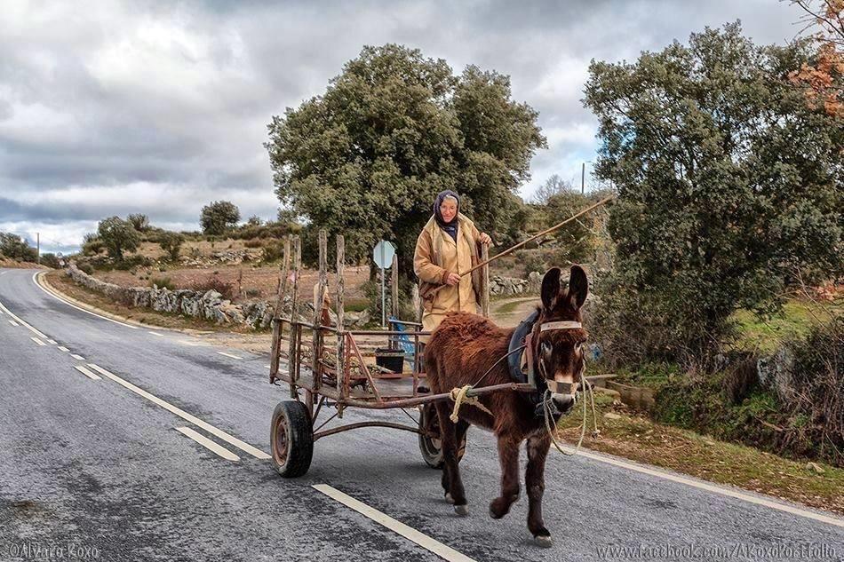 O burro e a carroça.JPG