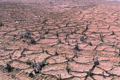 Desertificação.jpg