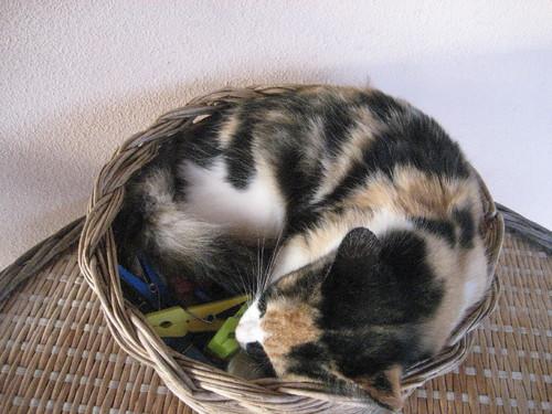 gato 5.JPG