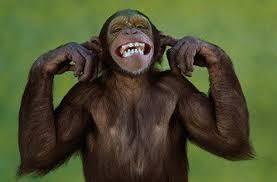 macaco1.jpg