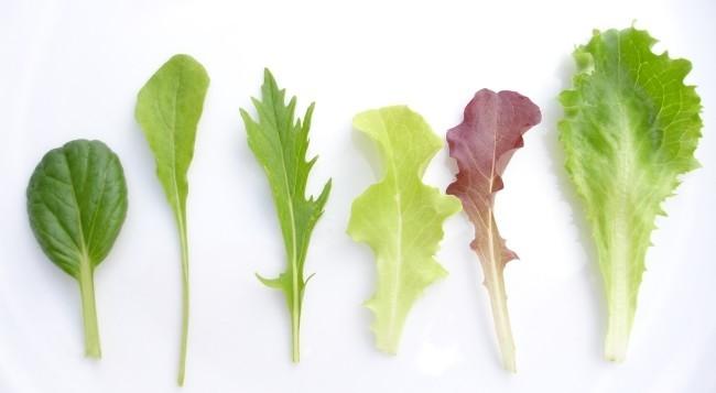 baby leaf.jpg